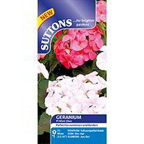 Geranium Seeds - F1 Mint Choc