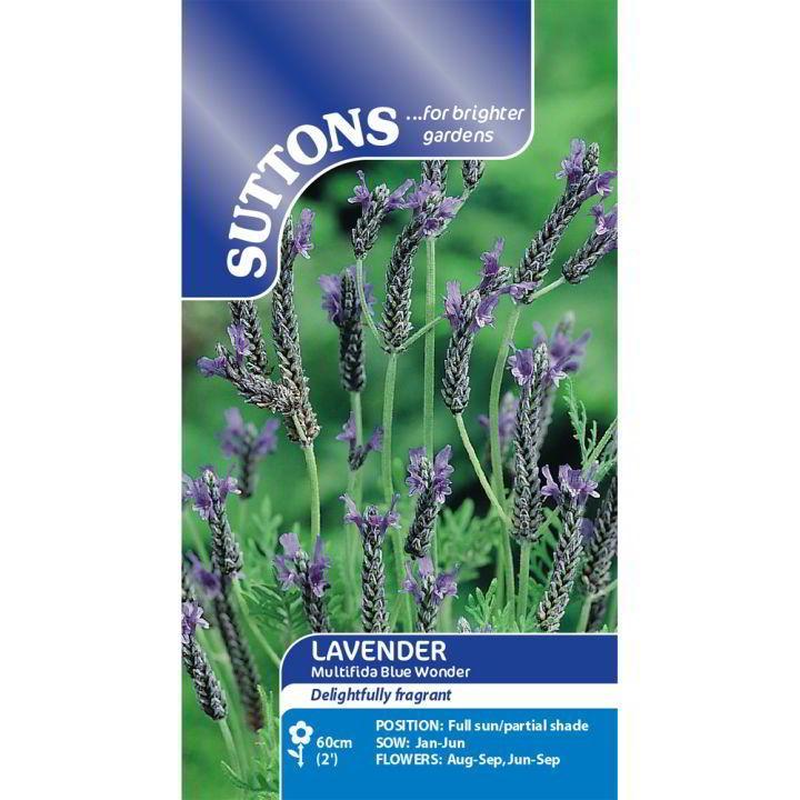 Lavender Seeds - multifida Blue Wonder