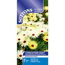 Livingstone Daisy Seeds - Yellow Sunshine