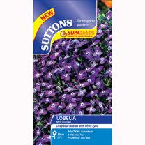 Lobelia Seeds - Mrs Clibran (Bush Variety)