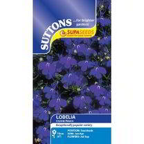 Lobelia Seeds - Crystal Palace