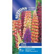 Lupin Seeds - Gallery Mix