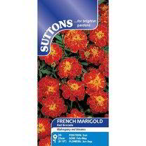 Marigold French Seeds - Red Brocade