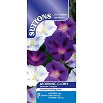Morning Glory Seeds - Inkspots