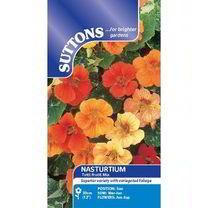 Nasturtium Seeds - Tutti Frutti Mix