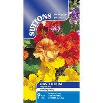Nasturtium Seeds - Tropical Mix