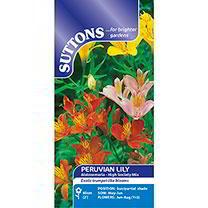 Peruvian Lily Seeds - High Society Mix