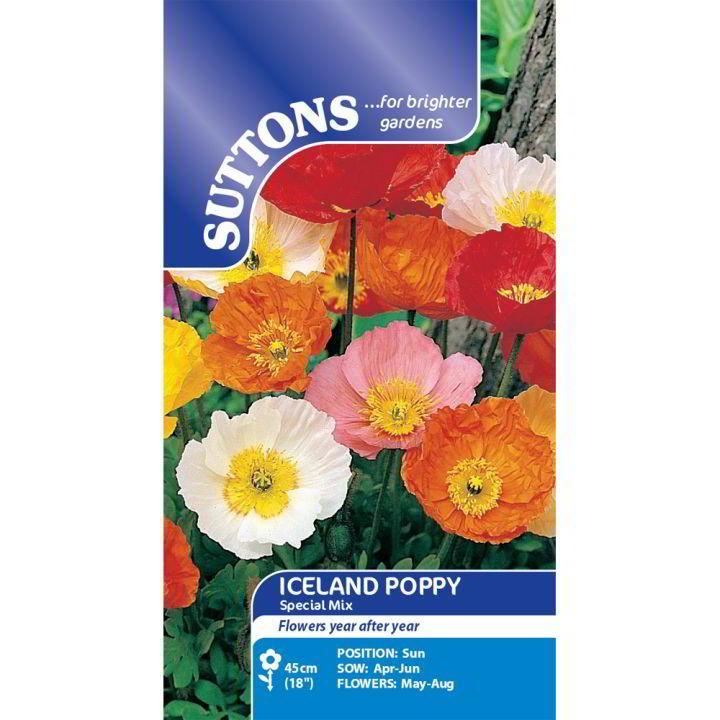 Poppy Seeds - Iceland Poppy