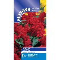 Salvia splendens Seeds - Blaze of Fire