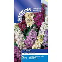 Stock Seeds - Giant Perfection Mix