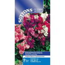 Stock Seeds - Sweetly Scented Mix