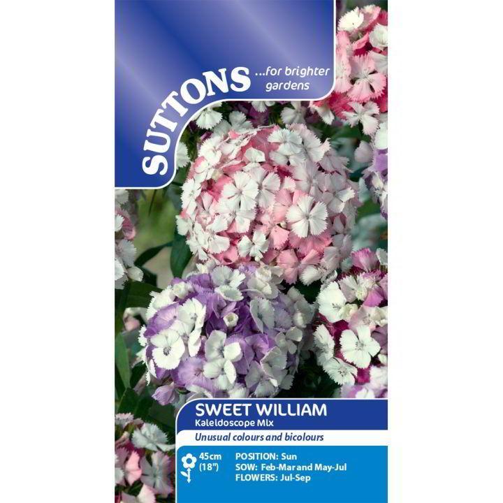 Sweet William Seeds - Kaleidoscope Mix