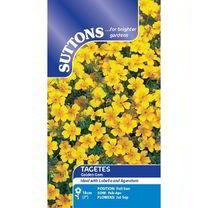 Tagetes tenuifolia pumila Seeds - Golden Gem