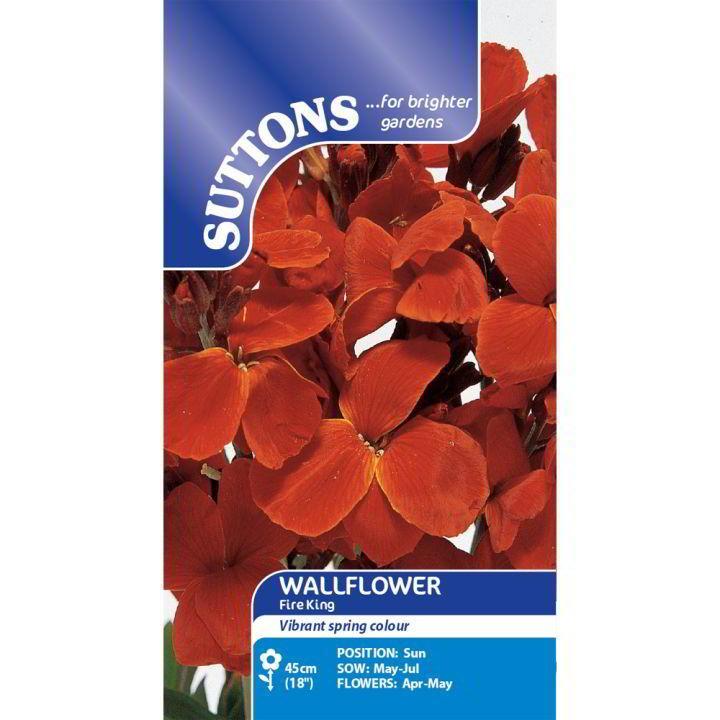 Wallflower Seeds - Fire King