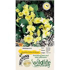 Primrose Seeds - Wild