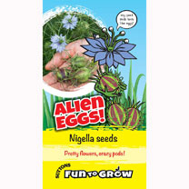 Easy to grow, brightly coloured edible flowers, followed by impressively weird seed pods that look like Alien Eggs! You can also pick and dry the eggs