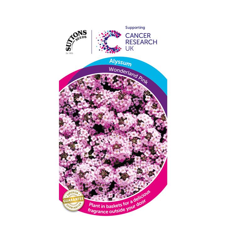 Alyssum Seeds - Wonderland Pink