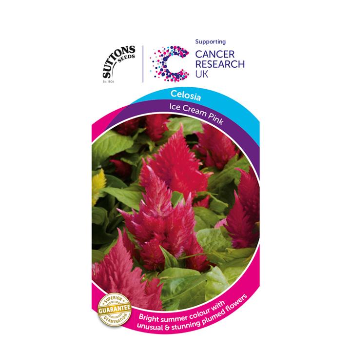 Celosia Seeds - Ice Cream Pink