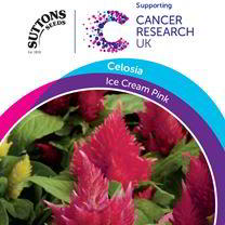 Celosia Seeds - Ice Cream Pink
