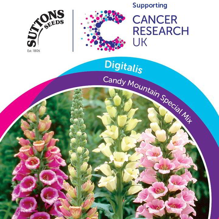 Digitalis Seeds - Candy Mountain Special Mix