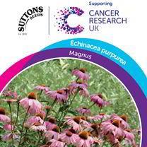 Echinacea purpurea Seeds - Magnus