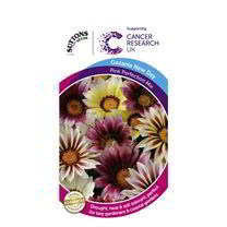 Gazania Seeds - Pink Perfection Mix