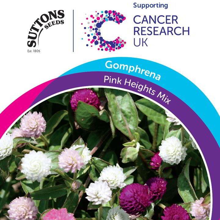 Gomphrena Seeds - Pink Heights Mix