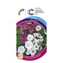 Lavatera Seeds - Beauty Mix