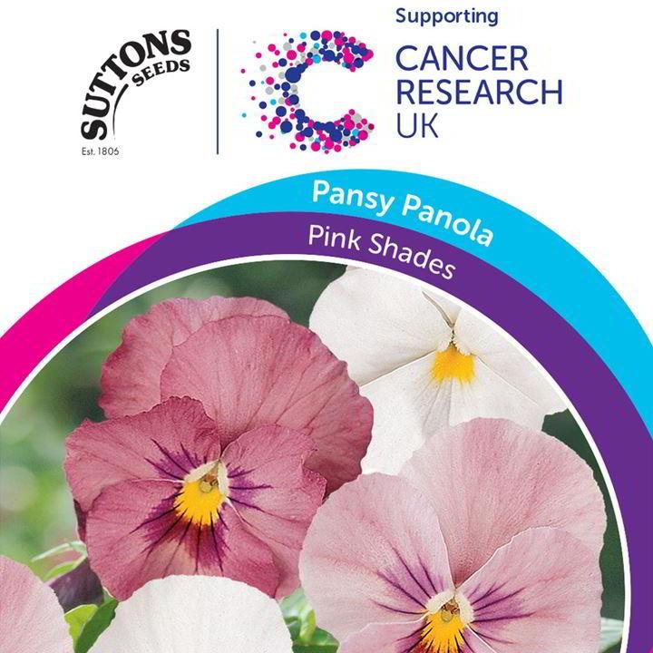Pansy Panola Seeds - Pink Shades