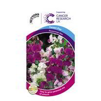 Sweet Pea Seeds - Perennial Mix