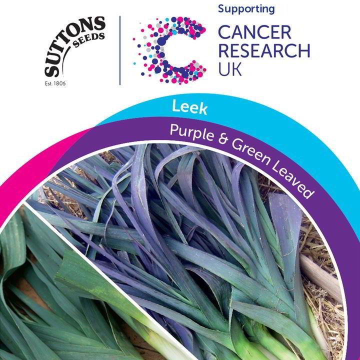 Leek Seeds - Purple & Green Leaved