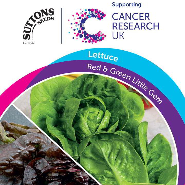 Lettuce Seeds - Red & Green Little Gem