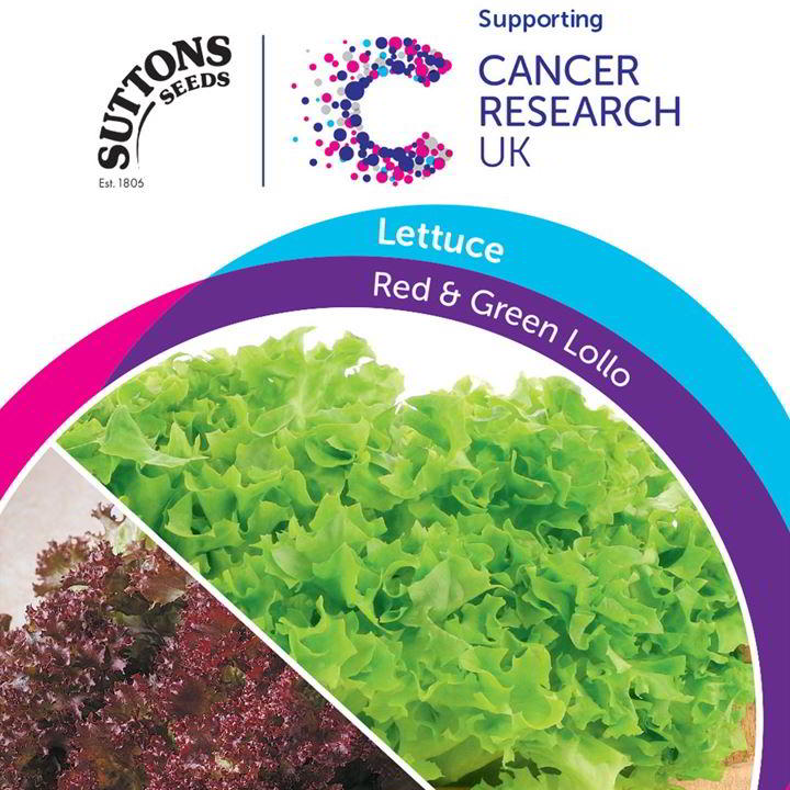 Lettuce Seeds - Red & Green Lollo