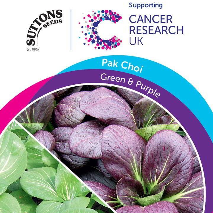 Pak Choi Seeds - Green & Purple