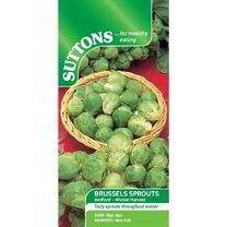 Brussels Sprout Seeds - Bedford - Winter Harvest