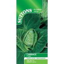 Cabbage Seeds - F1 Hispi