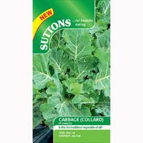 Cabbage (Collard) Seeds - F1 Sweetie