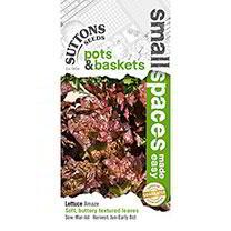 Lettuce Seeds - Amaze