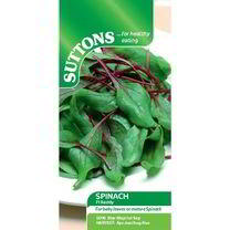 Spinach Seeds - F1 Reddy