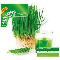 Wheatgrass Shoots Seeds