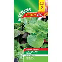Speedy Veg Seed - Leaf Salad Spicy Mix