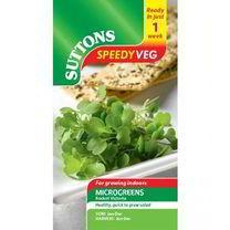 Speedy Veg Seed - Rocket Victoria