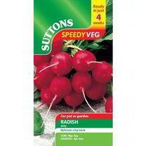 Speedy Veg Seed - Radish Jolly
