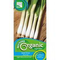 Onion Ramrod Organic Seed