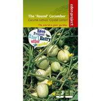 'Round' Cucumber Seed