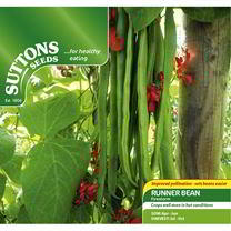 Bean (Runner) Seeds - Firestorm
