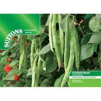 Bean (Runner) Seeds - Scarlet Emperor