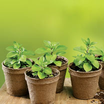 Sow & Grow 14 x 6cm Round Jiffy Pots & Compost Pellets