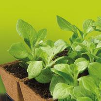 Sow & Grow 32 x 6cm Square Jiffy Pots & Compost Pellets