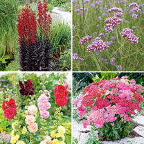 Best Seller Perennial Plants Collection